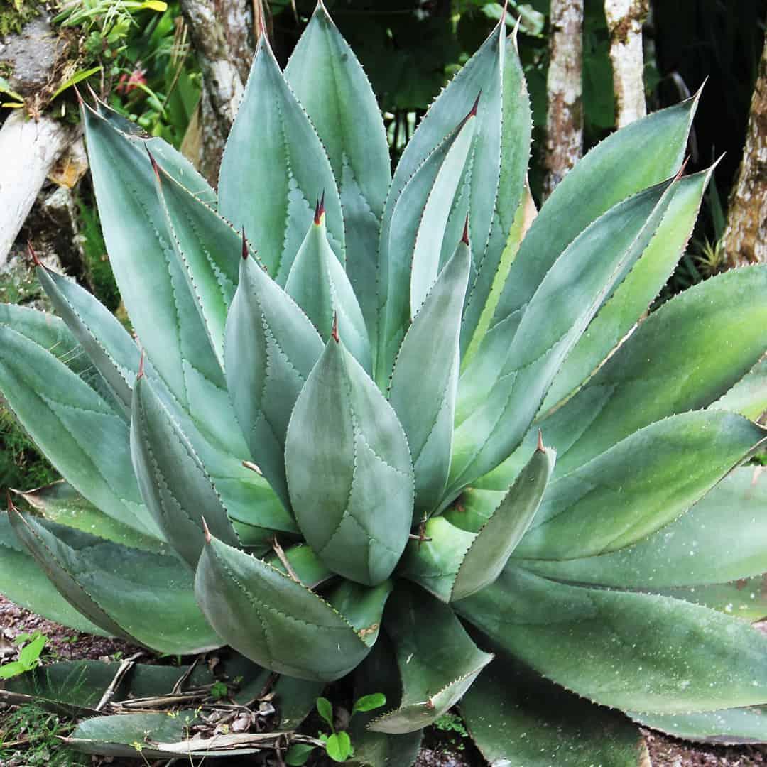 Vegan pur - Aloe Vera